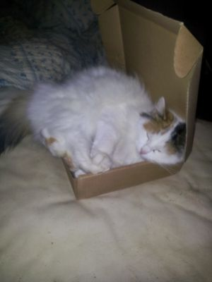 #VICKYthecat and the BOX