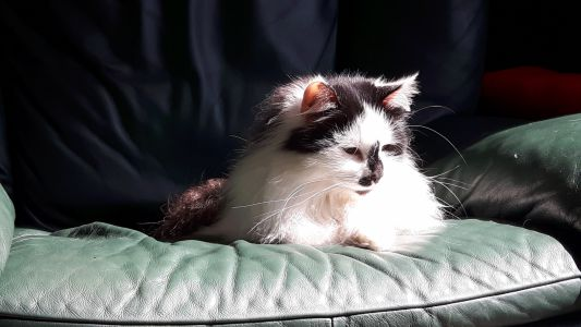 #GEORGEthecat sitting in the sun