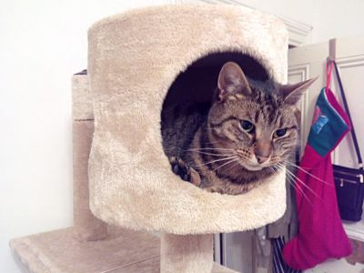 #LIZZYthecat in the Round Cat Tower