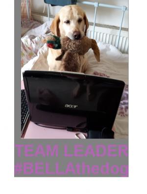 #BELLAthedog TEAM LEADER