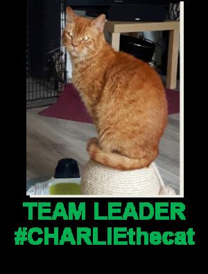 #CHARLIEthecat TEAM LEADER