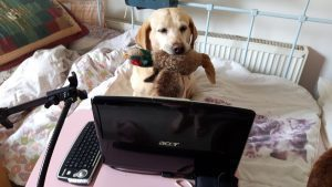 #BELLAthedog hard at work proof reading product reviews