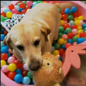 #BELLAtheDog in the BALL BATH / POOL where CATS and DOGS have FUN