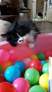#TROUBLEtheCat and the BALL BATH / POOL. Have a look at my VIDEOS, I did get into this This Great Interactive Cat Toy is so much fun. We at CATS and DOGS have FUN LOVE IT.